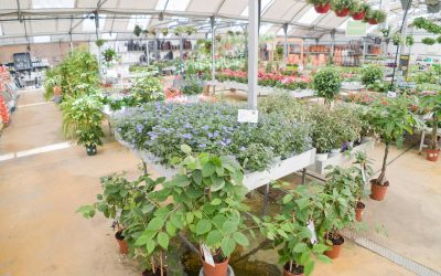 Sorteo Saliplant Garden