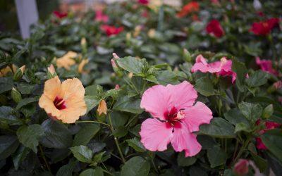 Saliplant Garden estrena página web